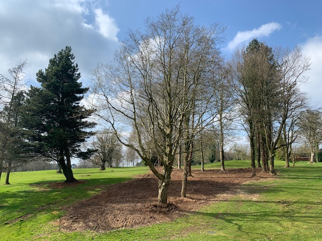 Sympathetic Tree Clearance To Allow More Desirable Trees To Flourish